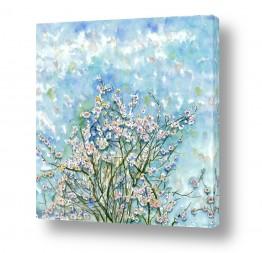 פרחים פרחים לפי צבעים | פריחה ברקע שמיים