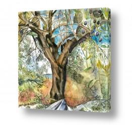 ציורים ציור | עץ זית עתיק