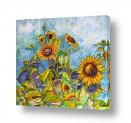 צומח פרחים | חמניות