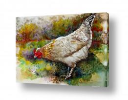 ציורים בעלי חיים | תרנגולת
