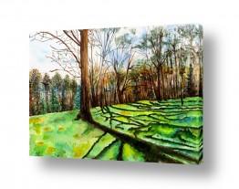ציורים ציור בצבעי מים | צל עצים