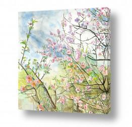 ציורים ציור בצבעי מים | שקדיות
