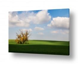 צילומים עידן גיל | עץ בודד