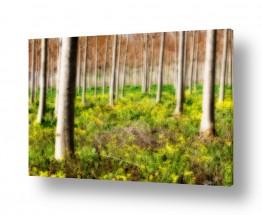 תמונות למקלחת | חלום ביער