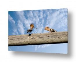 צילומים עידן גיל | הציפור הלאומית