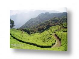 אסיה הודו | מטע התה