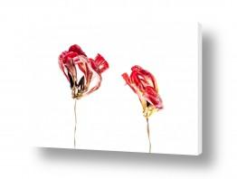 צילומים אילן עמיחי | אדום