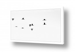 צילומים בעלי חיים | מעוף הציפור