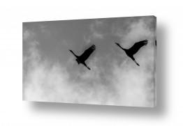 צילומים בעלי חיים | ציפורים2