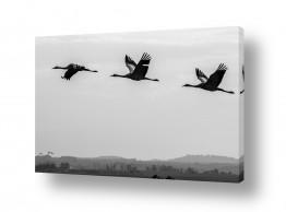 עונות השנה חורף | ציפורים 3