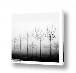 צילומים מזג-אוויר | foggy day