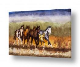 תמונות לפי נושאים חופש | סוסים בערבה