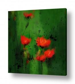 פרחים פרגים | אופיום להמונים