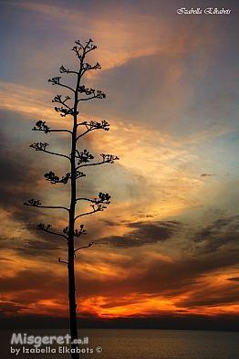 עץ ושקיעה