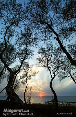 שקיעה בין העצים