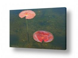 צילומים איזבלה אלקבץ | צמח במים