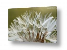 צמחים פרחים | זיקוקים