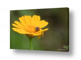 נוף תמונה פנורמית | אורח על הפרח