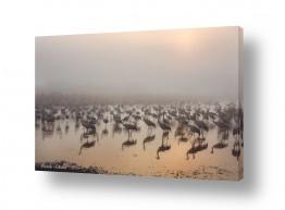 צילומים מזג-אוויר | עגורים בערפל