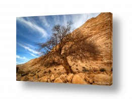צילומים שמים | העץ