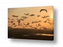 תמונות לפי נושאים חיות | לעוף אל המטרה