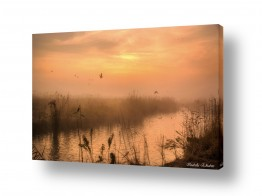 צילומים שמים | בוקר ערפלי באגמון