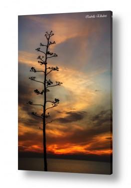נוף שקיעה | עץ ושקיעה