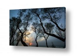 נוף תמונה פנורמית | שקיעה בין העצים