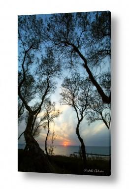 נוף שקיעה | שקיעה בין העצים