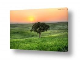 נוף זריחה | עץ בודד (HDR)