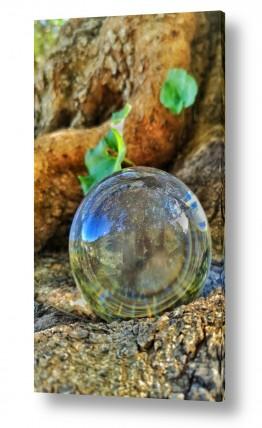 תמונות לפי נושאים lens ball | טבע בכדור זכוכית
