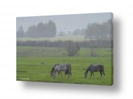 נושאים בעלי חיים - חיות | סוסים