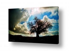 נוף מדבר | עץ בודד