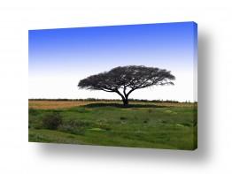 צמחים עץ | עץ השדה