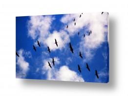 שמים עננים | חסידות עפות