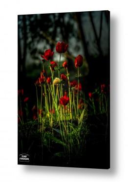 צילומים טבע דומם | קרן אור