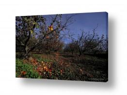 נוף שדות | שדה תפוחים