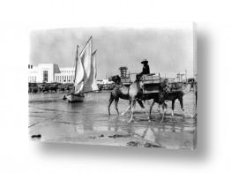 יונקים גמל | תל אביב 1939 - גמלים בחוף