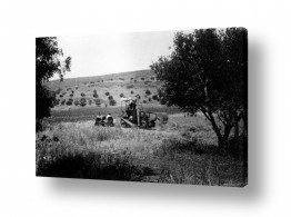 צילומים ארץ ישראל הישנה | ביתניה 1945 - טרקטור בשדה