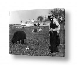 צילומים ארץ ישראל הישנה | שרון 1935 - רועה עם כבשים