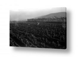 צילומים ארץ ישראל הישנה | ביתניה 1944