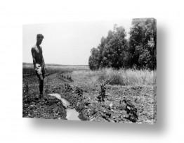 צמחים כרמים | ביתניה 1945 - חקלאי בשדה