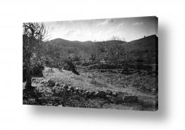 צילומים ארץ ישראל הישנה | בוסתן פורח 1947