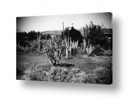 כפרי קיבוץ וכפר | חפציבה 1947, גן קקטוסים