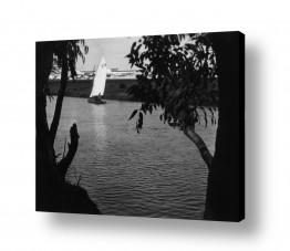 תמונות לפי נושאים אקליפטוס | תל אביב 1939 סירה בירקון