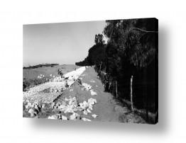 צילומים ארץ ישראל הישנה | נבי רובין 1940 בונים כביש