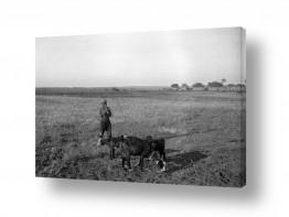 צילומים דוד לסלו סקלי | בית ג'ירג'יה 1940 רועה