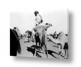 צילומים דוד לסלו סקלי | ג'ירג'ה 1940 מרוץ גמלים