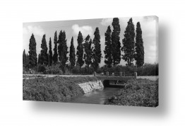 אורבני גשר | נהריה 1942 נחל זורם