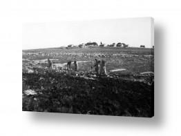 צילומים ארץ ישראל הישנה | כפר עציון 1946 הכשרת קרקע